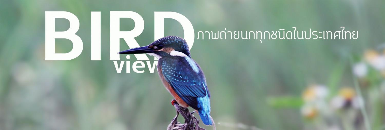 ภาพถ่ายนกทุกชนิดที่พบในประเทศไทย