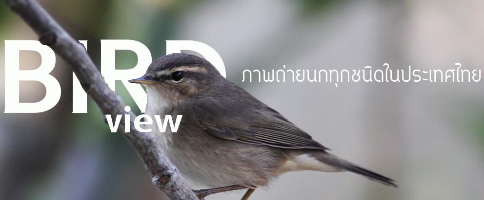ภาพนกทุกชนิดที่พบในประเทศไทย