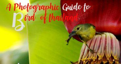 ภาพถ่ายและรายชื่อนกทุกชนิดที่พบในประเทศไทย